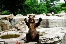 Аплодисменты в Калининградском Зоопарке