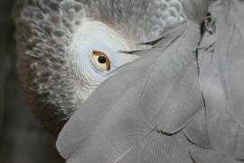 Вредный попугай