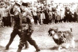Самый необычный военный парад или ход козлом