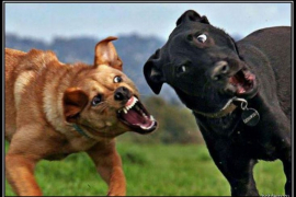 Собачий язык