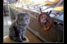 Боевой кот Васька