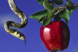 Недостоверное яблоко Древа Познания