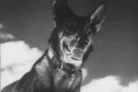 Пёс Джульбарс на Параде Победы