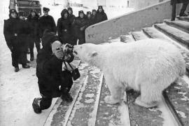 Охота московского фотографа на белого медведя