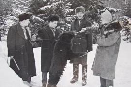Как Леонид Гайдай медведя покормил