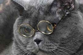Кот учёный. Он же хатульмадан