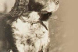 Блокадный пёс Трезор, спасший от голода 16 человек