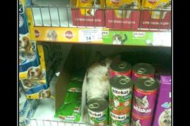 История про сухой кошачий корм