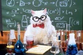 Открытие йода котом
