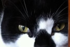 Кот-клептоман по кличке Денис-Угроза