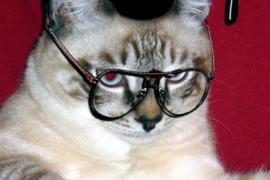 Кошка-ассистентка Роберта Вуда