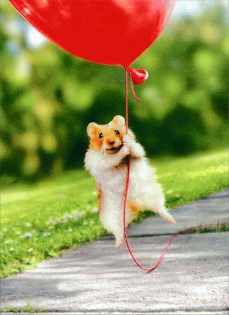 Прикольные картинки с воздушными шариками