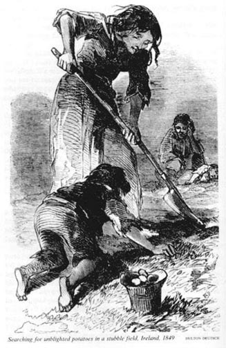 a history of the great potato famine in ireland Find and save ideas about irish famine on pinterest | see more ideas about the irish potato famine, the great potato famine and potato famine.