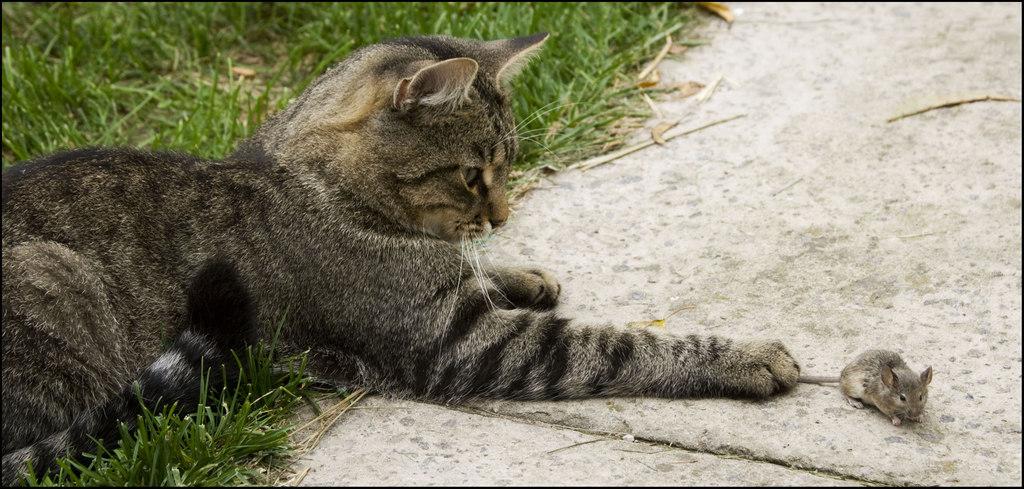 в перчатках кошка мышей не ловит